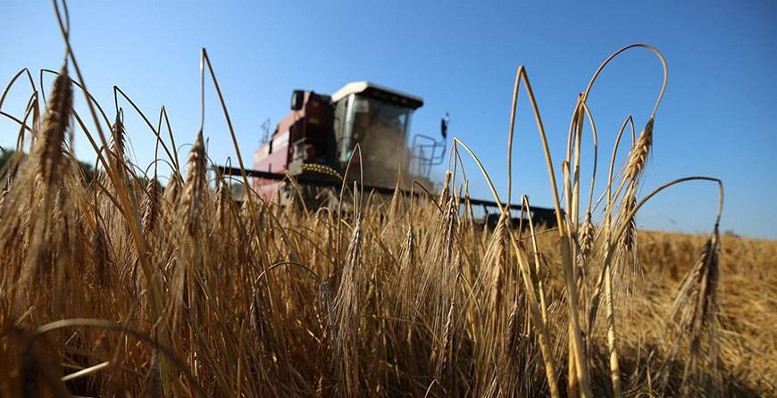 Массовая уборка зерновых стартовала в Беларуси