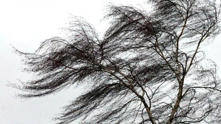 Берегитесь, сильный ветер! Штормовое предупреждение продлено до 11 февраля
