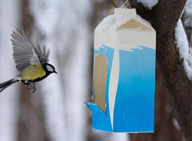 Сезонный фудкорт для синичек - делаем кормушки и помогаем птицам пережить зиму