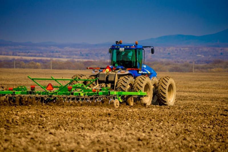 На корм и на зерно. Почему в Кореличском районе увеличили площади сева кукурузы?