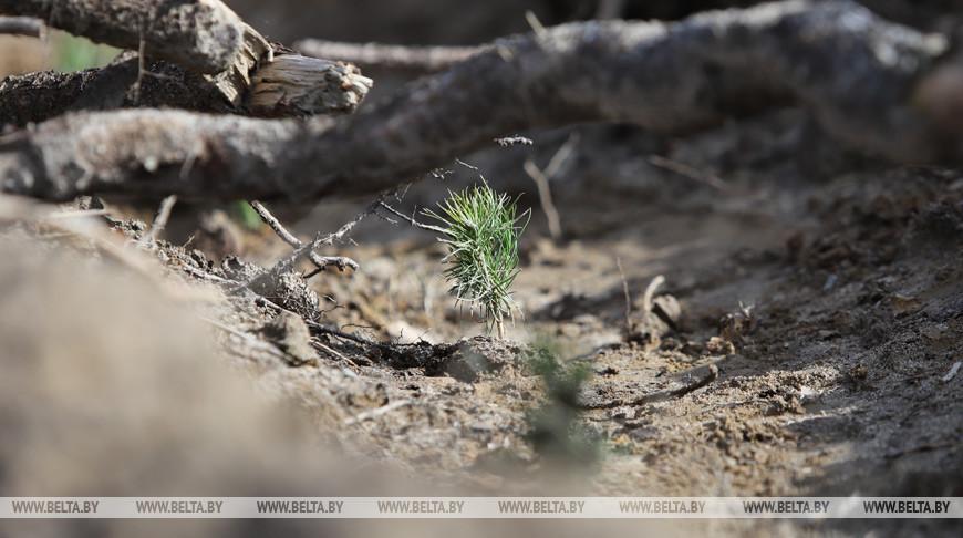 Месячник по осенней посадке деревьев и кустарников продлится в Беларуси до 2 ноября