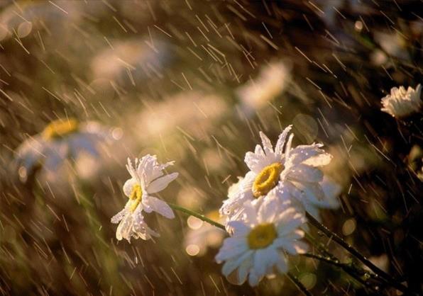 Дожди, грозы и сильный ветер ожидаются в Беларуси 8 июля