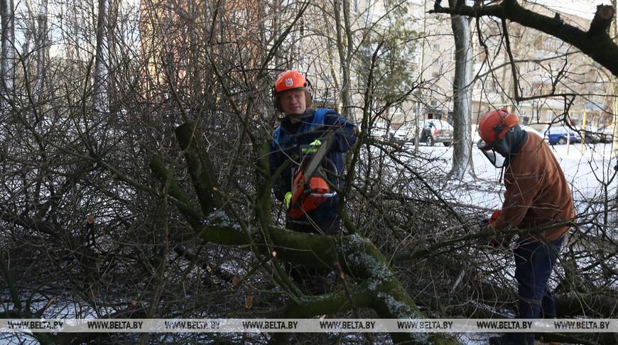 Утренний снег и ветер в Гродненской области: зафиксировано 17 случаев падения деревьев на дороги
