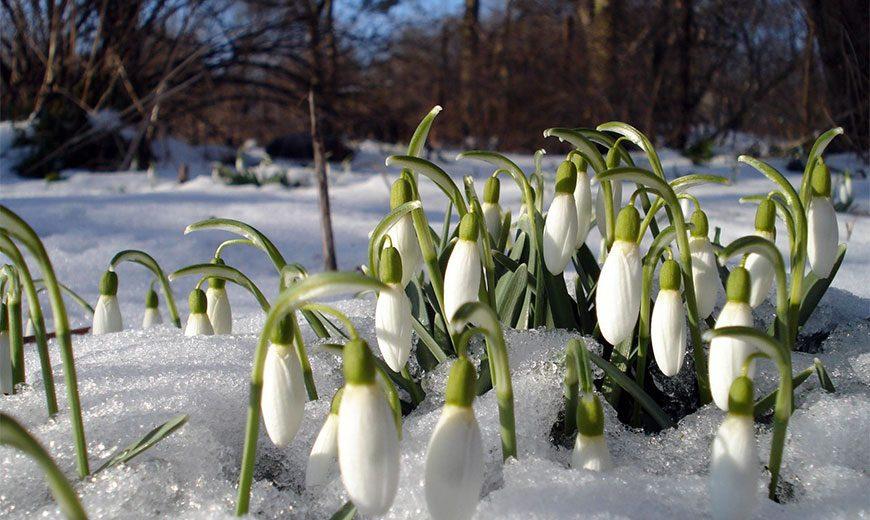 До +12°С ожидается в Беларуси на этой неделе