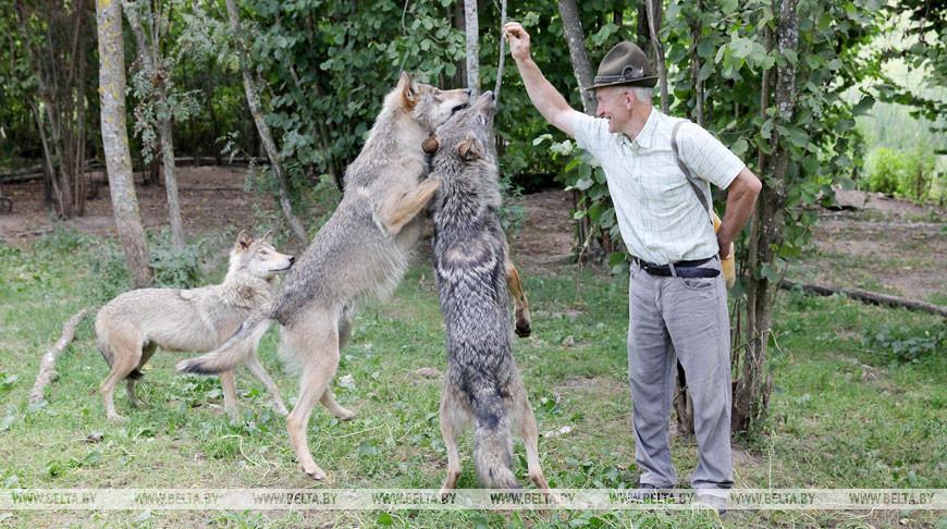 Французская компания планирует снять фильм о дикой природе Беларуси