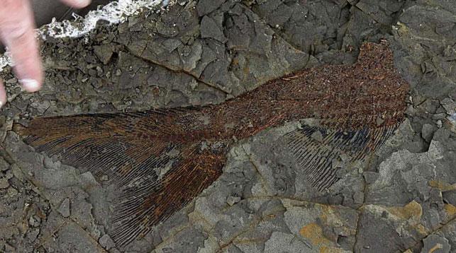 Ученые обнаружили захоронение доисторических существ, погибших вместе с динозаврами