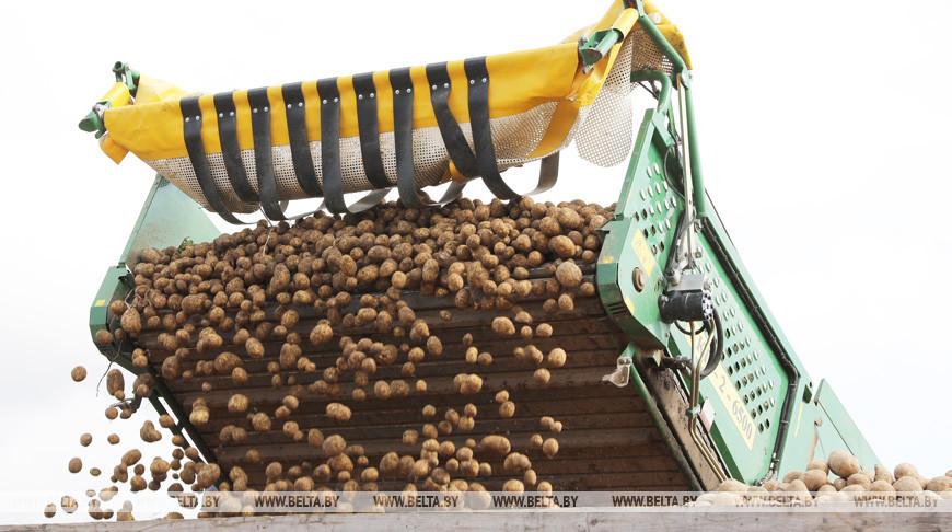 Погода в ближайшие дни будет способствовать завершению уборки картофеля — Белгидромет