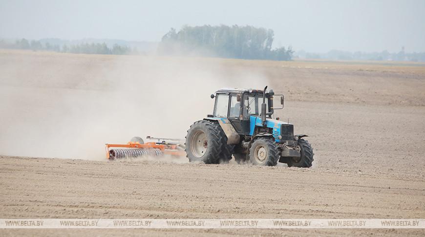 Массовый сев озимых зерновых начался в Беларуси