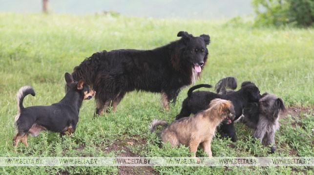 Законодательство по вопросам обращения с животными планируется урегулировать
