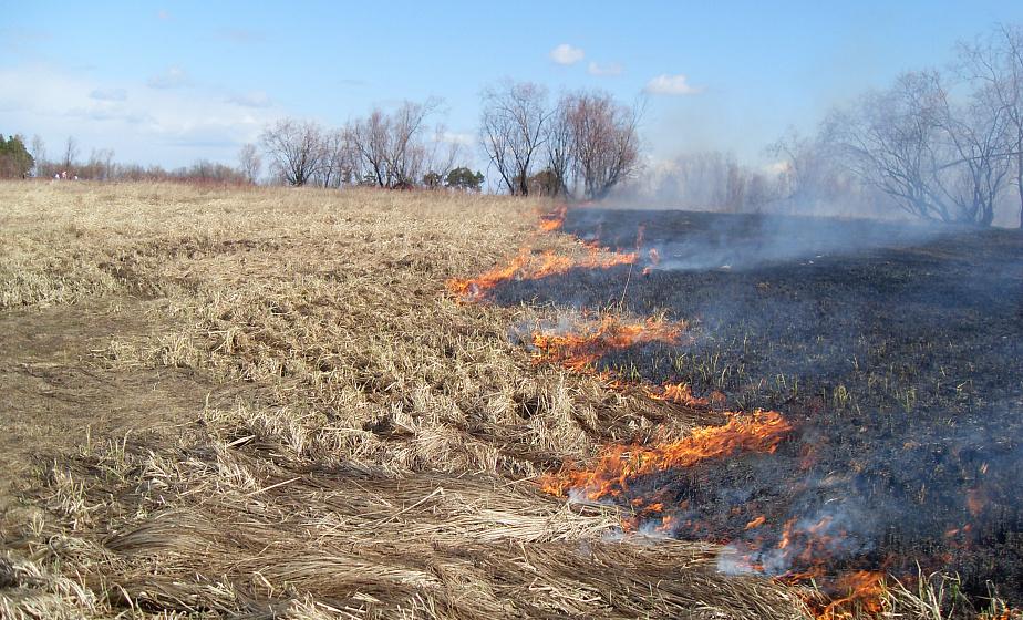 Пал или пропал? Чем опасны палы сухой травы и каких правил безопасности стоит придерживаться