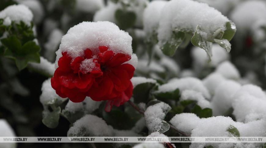 Мокрый снег и гололед ожидаются в Беларуси на этой неделе