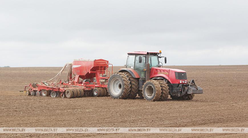 Сев озимых зерновых завершается в Беларуси