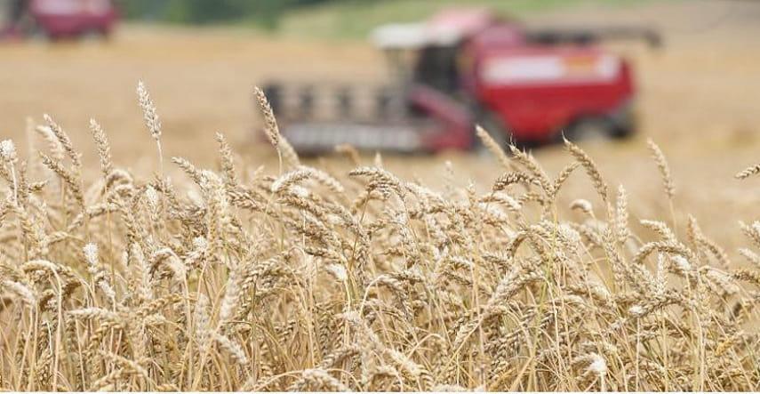 Белорусские аграрии намолотили более 5,3 млн т зерна