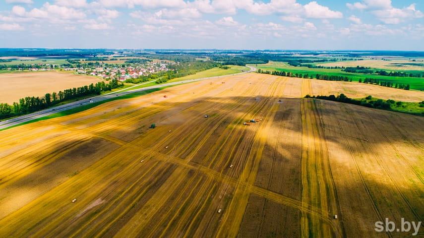 В Беларуси осталось убрать около 3% площадей зерновых