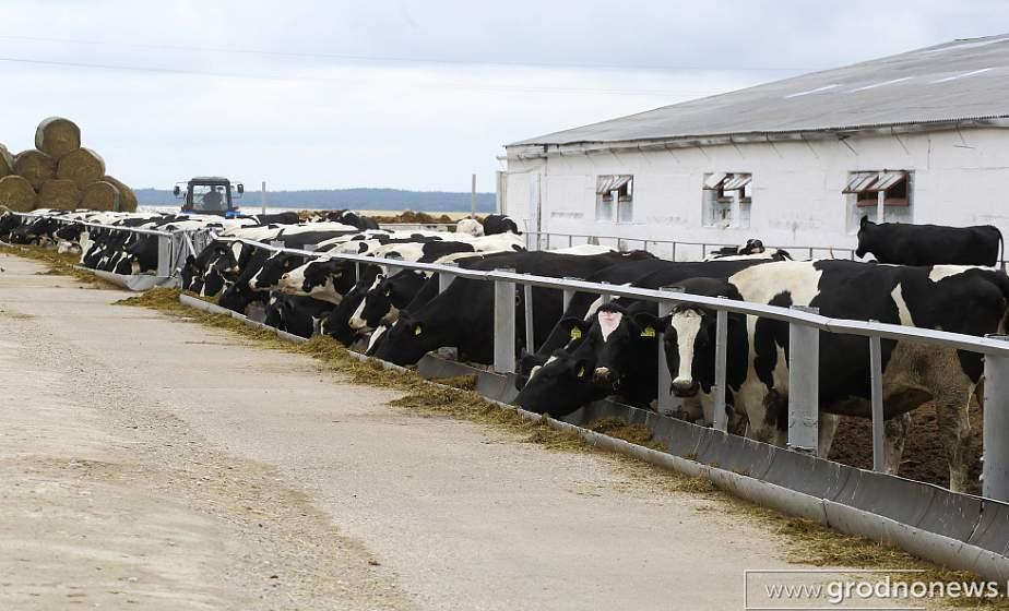 Новые фермы для большого молока. В 4 районах Гродненщины построят новые МТФ