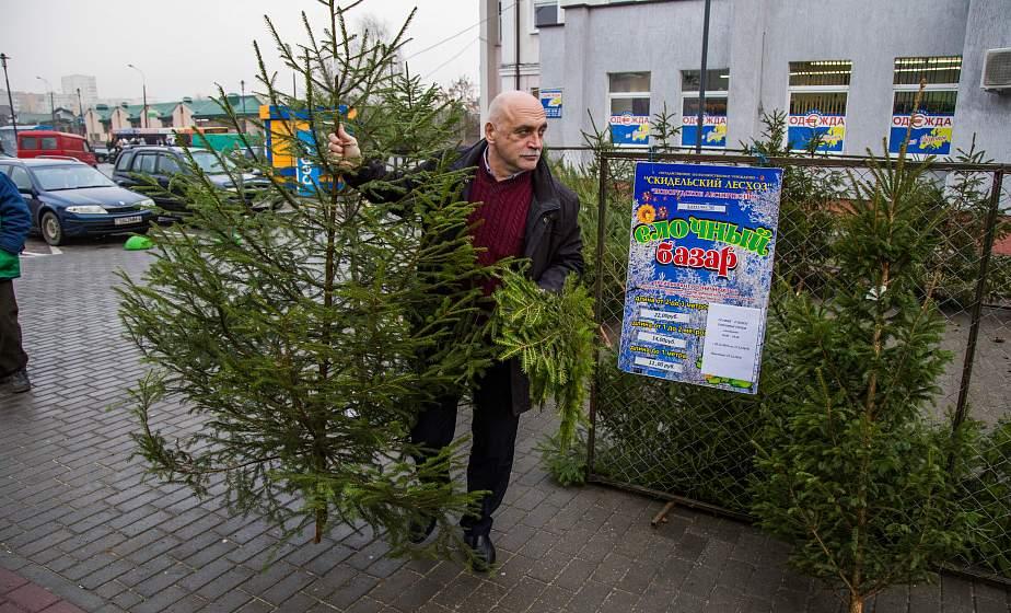 Деревья в кадках, сосны и даже новогодние букеты. Когда откроются елочные базары и что еще будет в ассортименте?