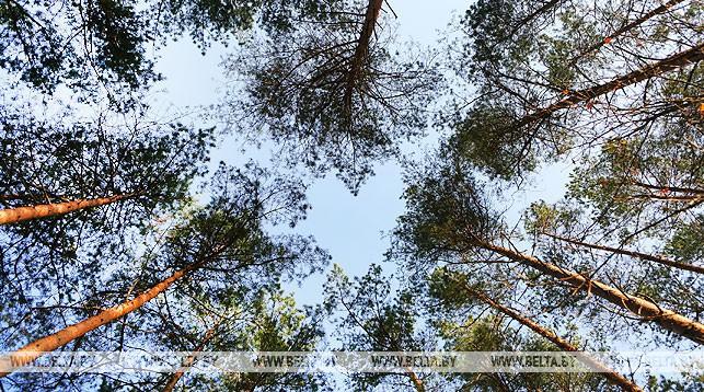 Леса открыты для посещения во всех районах Гродненской области