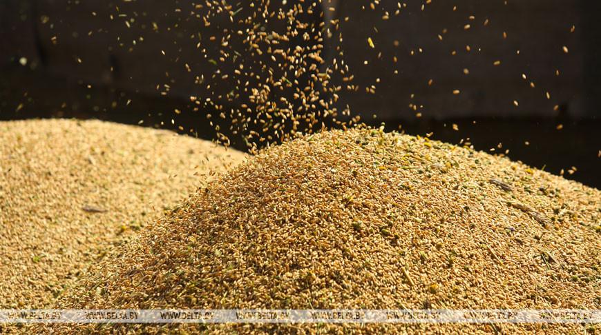 В Беларуси осталось убрать 6,3% площадей зерновых