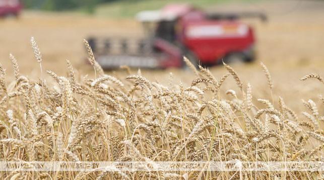 Белорусские аграрии собрали первый миллион тонн зерна