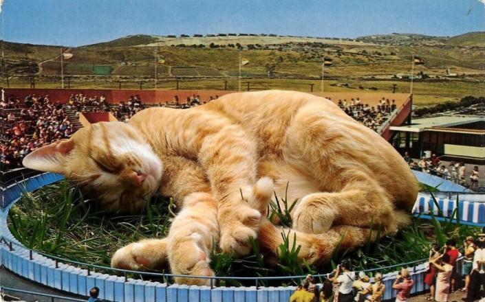 Сверхъестественный сюрреализм. Как фотограф создает изображения гигантских котов