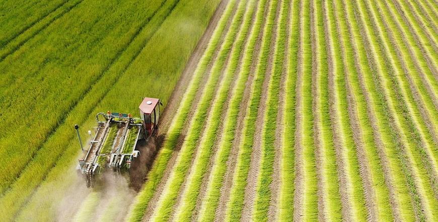 Теребление льна в Беларуси проведено более чем на половине площадей