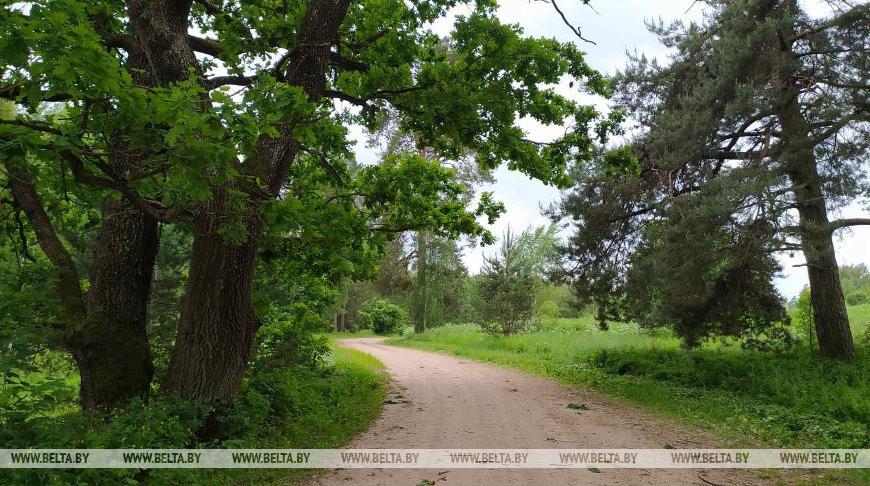 В Беларуси с начала года произошло 790 лесных пожаров