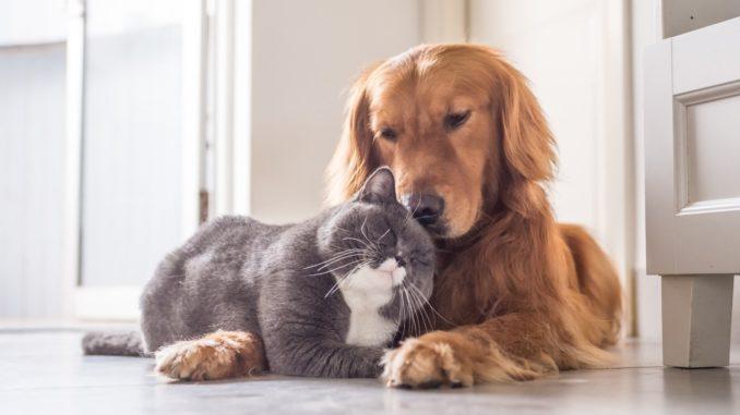Правила регистрации домашних животных