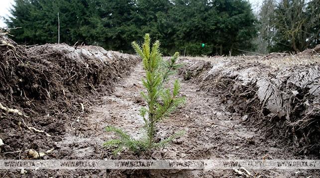 Около 20 млн деревьев планируется посадить во время Недели леса в Беларуси