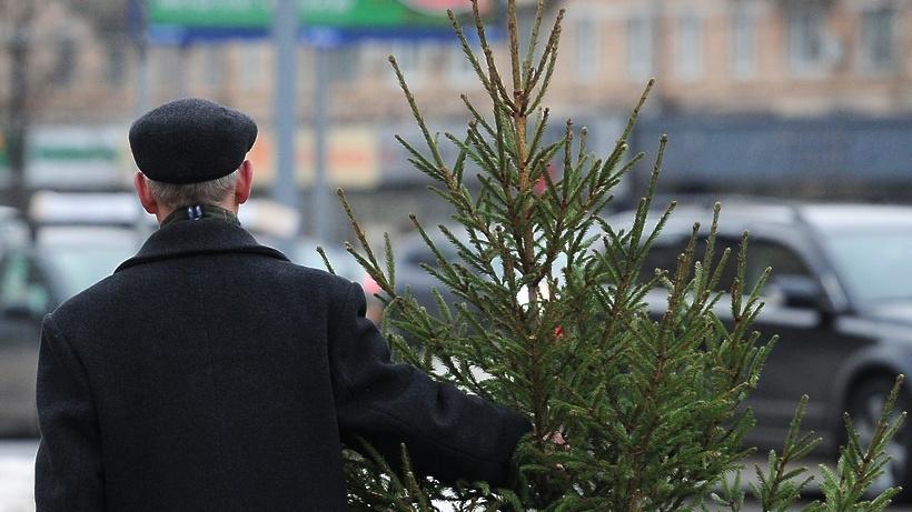 Хвойная ликвидация. Как правильно утилизировать живую новогоднюю елку после праздников