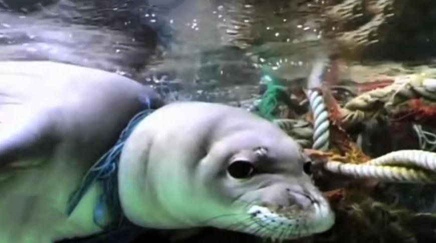 Ученые оценили объемы океанического микропластика (видео)