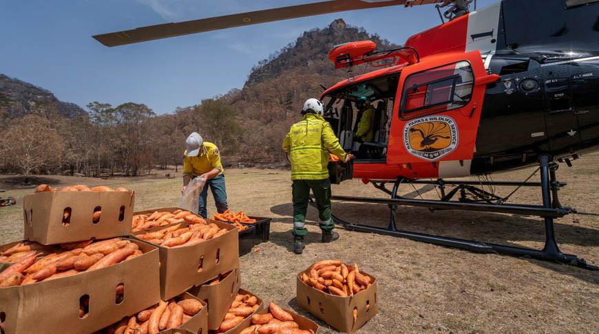 В Австралии сбрасывают с вертолетов корм для кенгуру в штате Новый Южный Уэльс