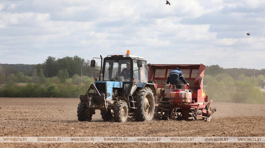 В Беларуси завершается сев овощей