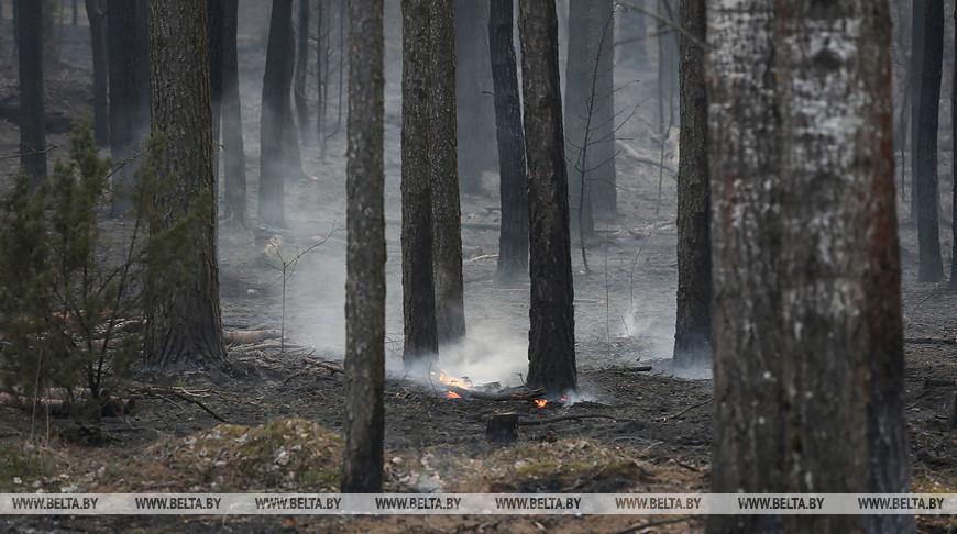 Более 100 пожаров произошло за сутки в экосистемах Беларуси