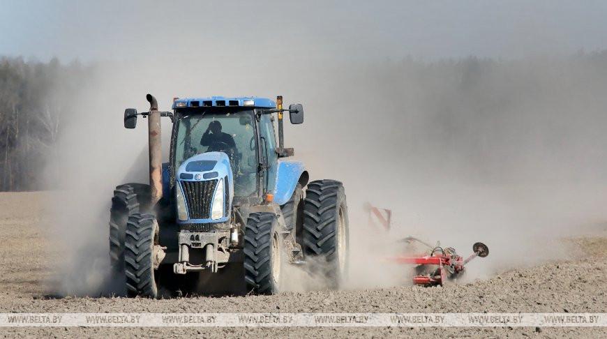 Почти половина озимых зерновых посеяна в Беларуси
