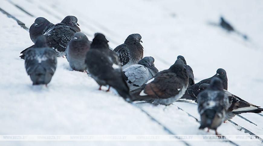 В Солигорске мужчину приговорили к году исправительных работ за убийство голубей