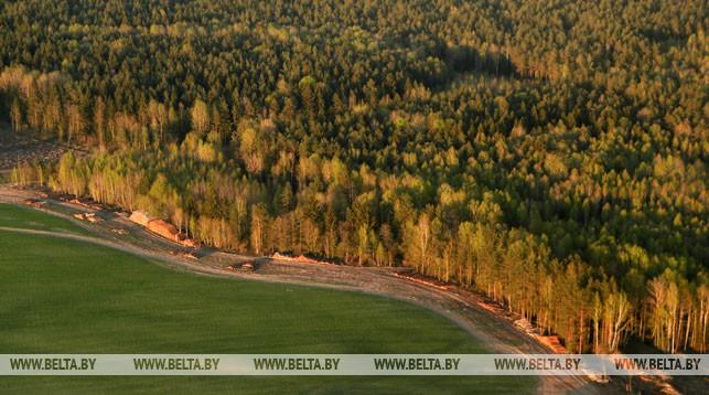 Запрет на посещение лесов снят в 32 районах Беларуси