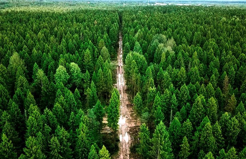 Ограничения на посещение лесов действуют в пяти районах Беларуси