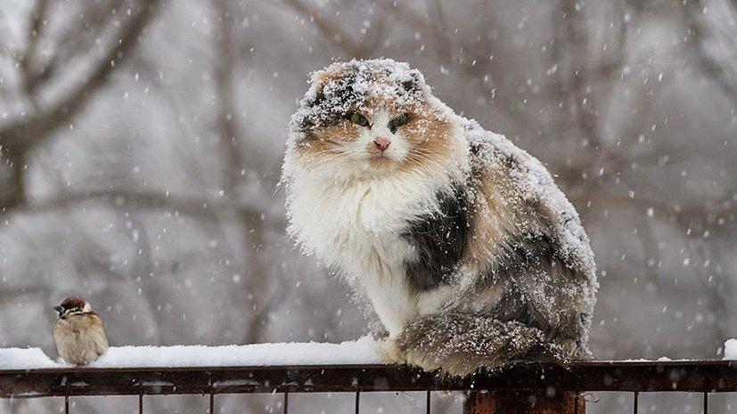 Мокрый снег и дождь ожидаются в Беларуси на следующей неделе