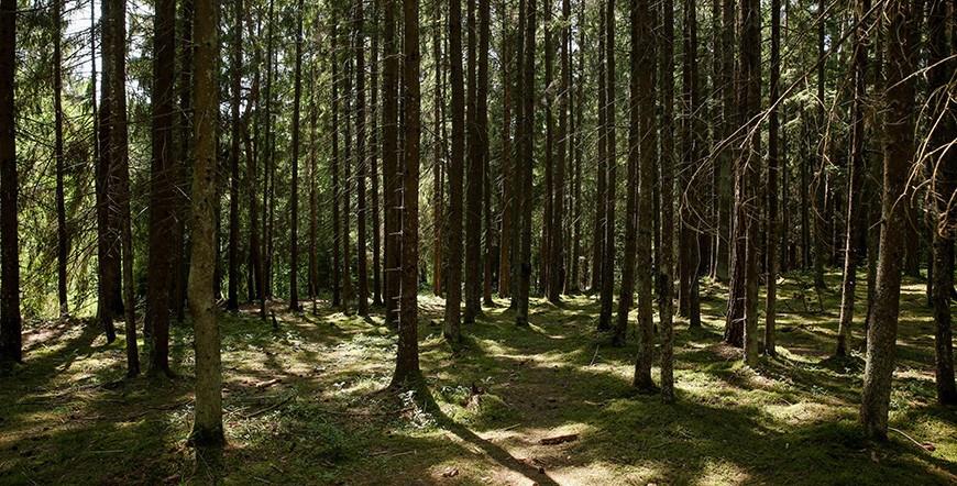 Запреты и ограничения на посещение лесов действуют в 31 районе Беларуси