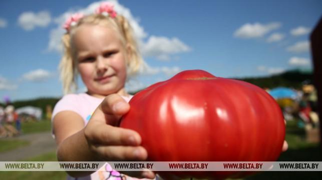 «Де-томатейро». В Ивье 22 августа пройдет брендовый праздник помидоров