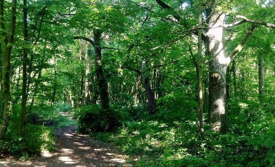 С 10 апреля в Гродно вводится запрет на посещение лесов