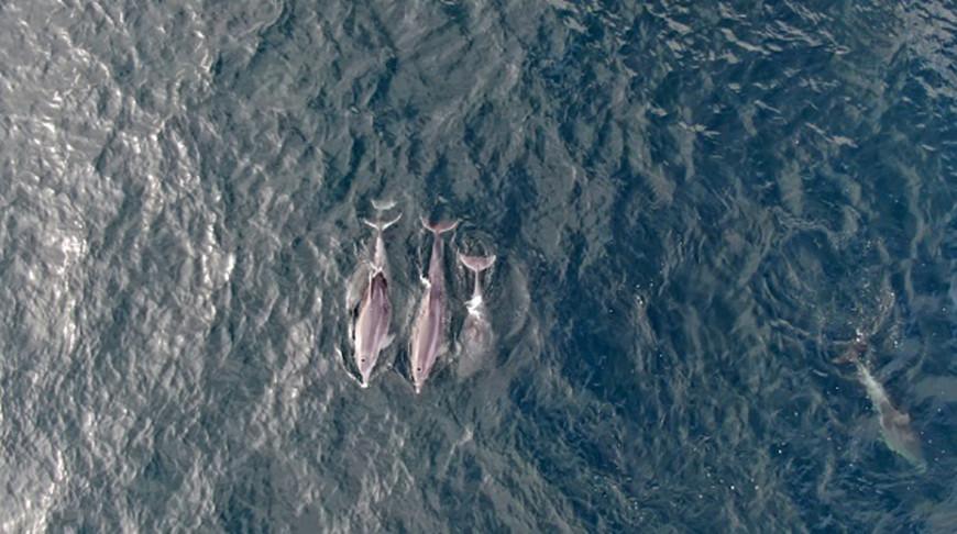 Дельфины появились в проливе Босфор после введения комендантского часа в Турции - их сняли при помощи дронов