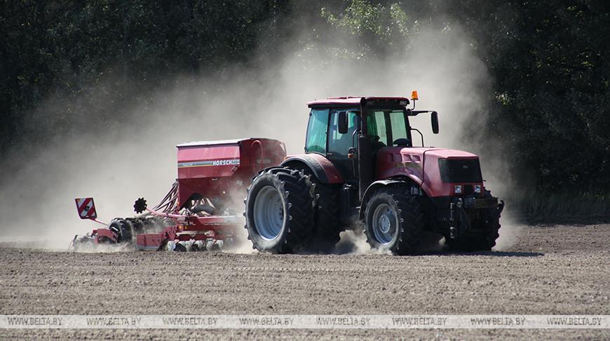 В Беларуси завершается сев озимых крестоцветных на зерно