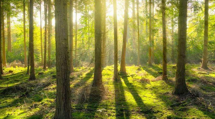 Ограничения на посещение лесов действуют в 20 районах Беларуси