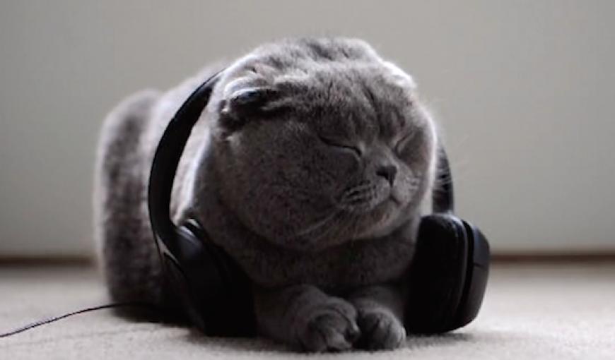 Музыкальный сервис Spotify создал плейлисты и подкасты для домашних животных