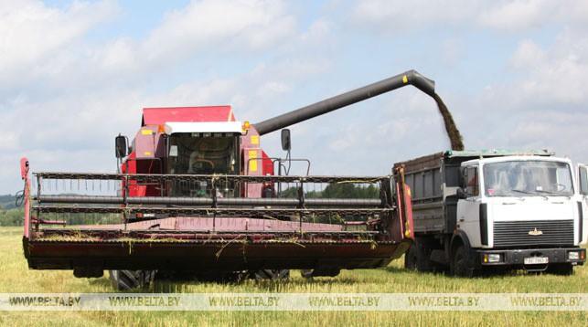 Более 90% площадей озимого рапса на зерно убрано в Беларуси