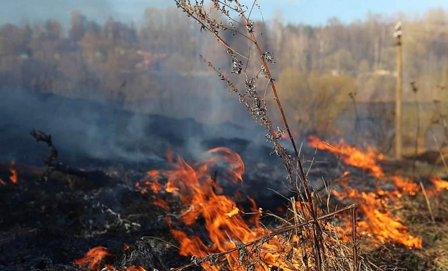 Опасная традиция. Чем грозят весенние палы сухой травы?