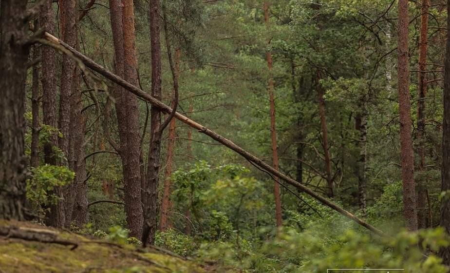Азбука безопасности. Что делать, если человек заблудился в лесу
