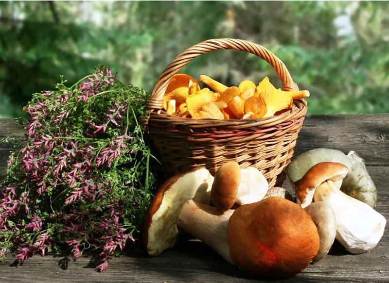 Летние грибы и ягоды картинки для детей