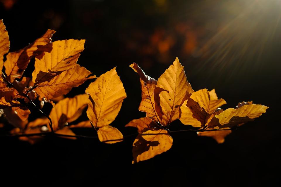 leaves-3851298_960_720.jpg